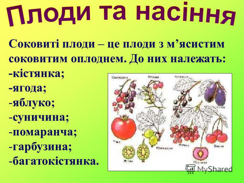 Соковиті плоди – це плоди з мясистим соковитим оплоднем. До них належать: -кістянка; -ягода; -яблуко; -суничина; -помаранча; -гарбузина; -багатокістянка.