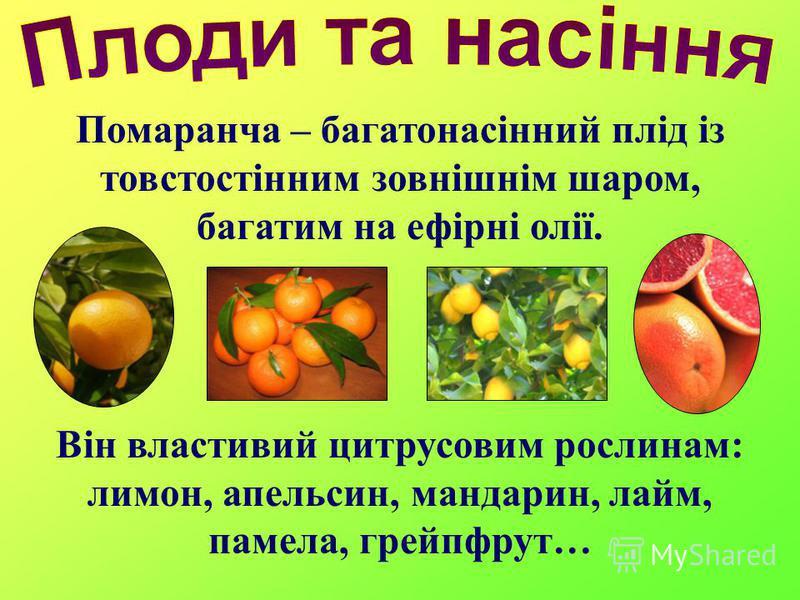 Помаранча – багатонасінний плід із товстостінним зовнішнім шаром, багатим на ефірні олії. Він властивий цитрусовим рослинам: лимон, апельсин, мандарин, лайм, памела, грейпфрут…