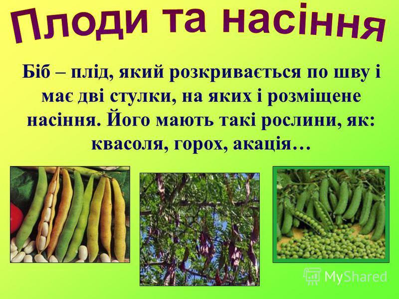Біб – плід, який розкривається по шву і має дві стулки, на яких і розміщене насіння. Його мають такі рослини, як: квасоля, горох, акація…