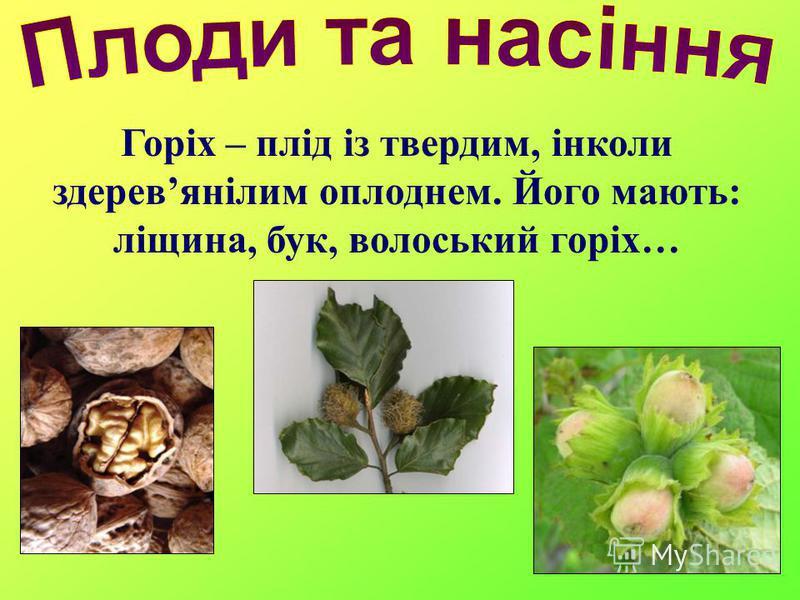 Горіх – плід із твердим, інколи здеревянілим оплоднем. Його мають: ліщина, бук, волоський горіх…