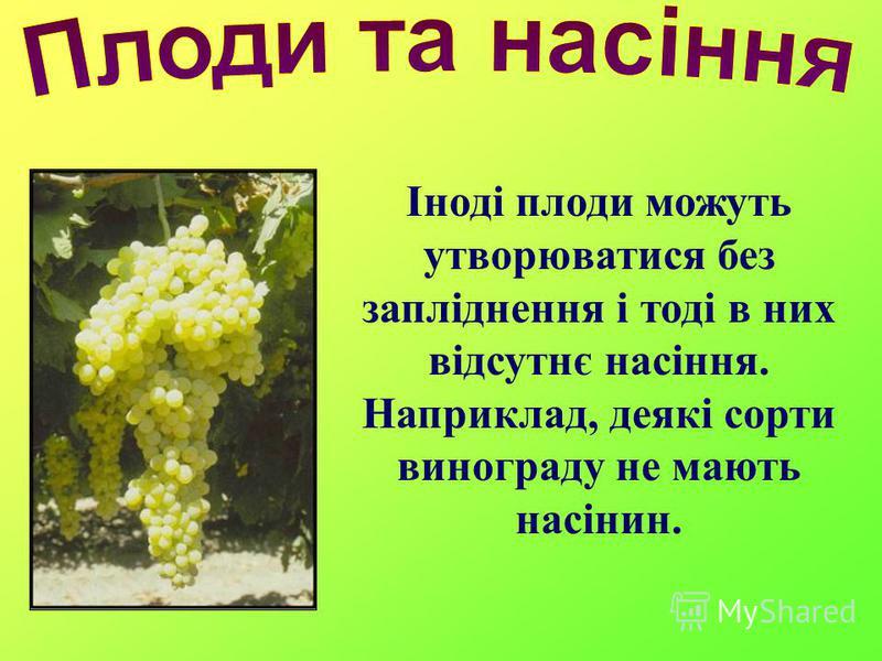Іноді плоди можуть утворюватися без запліднення і тоді в них відсутнє насіння. Наприклад, деякі сорти винограду не мають насінин.