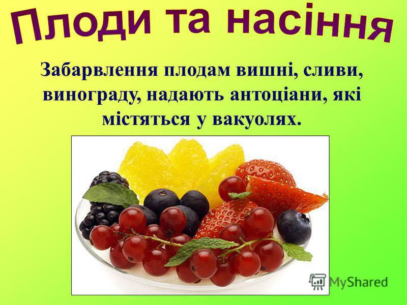 Забарвлення плодам вишні, сливи, винограду, надають антоціани, які містяться у вакуолях.
