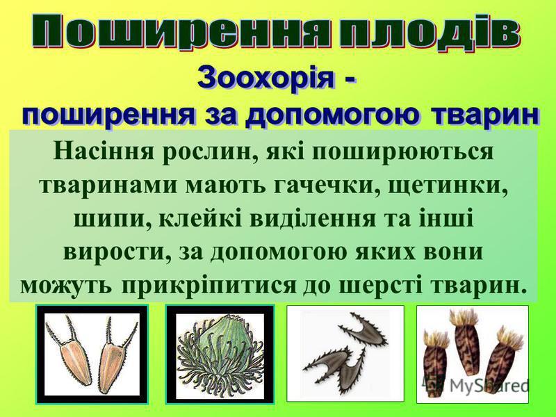 Насіння рослин, які поширюються тваринами мають гачечки, щетинки, шипи, клейкі виділення та інші вирости, за допомогою яких вони можуть прикріпитися до шерсті тварин.