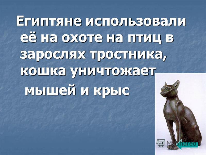 Египтяне использовали её на охоте на птиц в зарослях тростника, кошка уничтожает Египтяне использовали её на охоте на птиц в зарослях тростника, кошка уничтожает мышей и крыс мышей и крыс