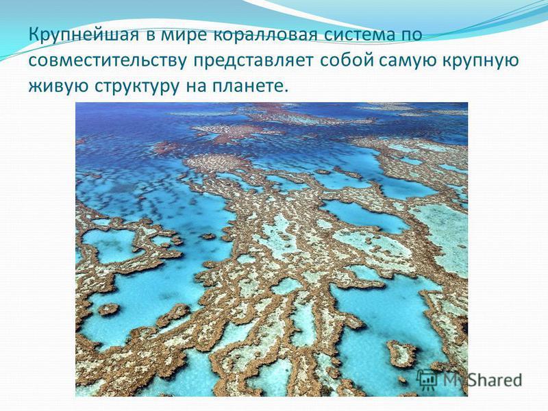 Крупнейшая в мире коралловая система по совместительству представляет собой самую крупную живую структуру на планете.