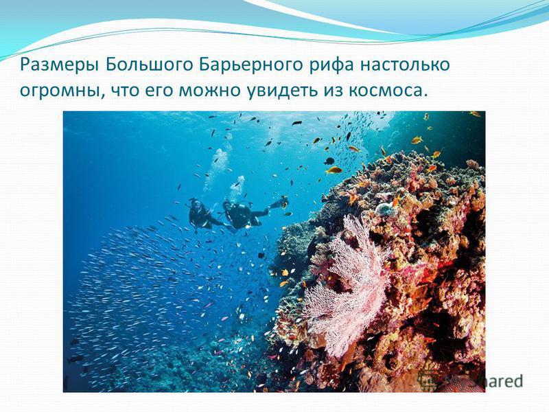 Размеры Большого Барьерного рифа настолько огромны, что его можно увидеть из космоса.