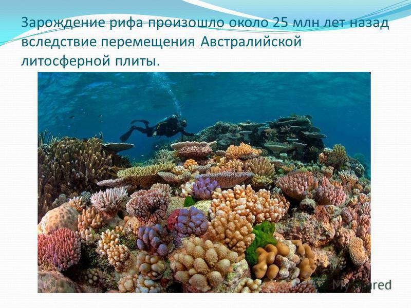 Зарождение рифа произошло около 25 млн лет назад вследствие перемещения Австралийской литосферной плиты.