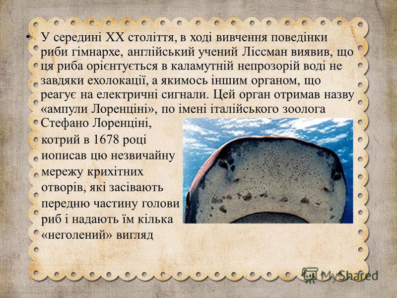 котрий в 1678 році иописав цю незвичайну мережу крихітних отворів, які засівають передню частину голови риб і надають їм кілька «неголений» вигляд У середині XX століття, в ході вивчення поведінки риби гімнархе, англійський учений Ліссман виявив, що