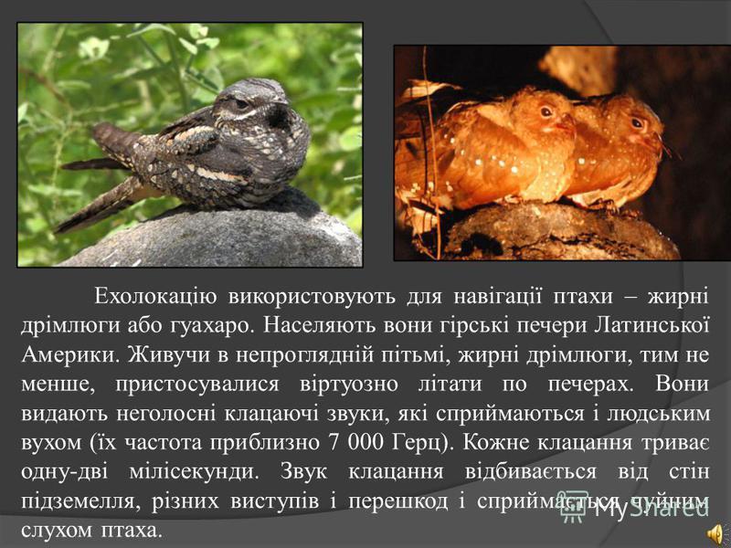 У природі УЗ зустрічається як в якості компонентів багатьох природних шумів (у шумі вітру, водоспаду, дощу, в звуках, які супроводжують грозові розряди, і т.д.), так і серед звуків тваринного світу. Деякі тварини користуються УЗ-вимі хвилями для вияв