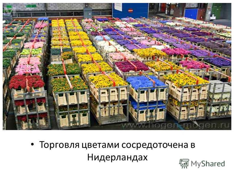 Торговля цветами сосредоточена в Нидерландах