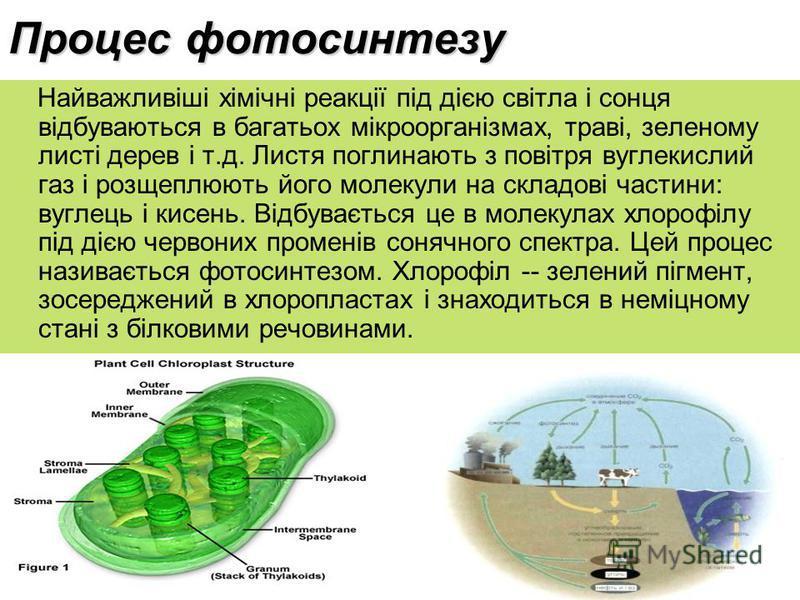 Процес фотосинтезу Найважливіші хімічні реакції під дією світла і сонця відбуваються в багатьох мікроорганізмах, траві, зеленому листі дерев і т.д. Листя поглинають з повітря вуглекислий газ і розщеплюють його молекули на складові частини: вуглець і