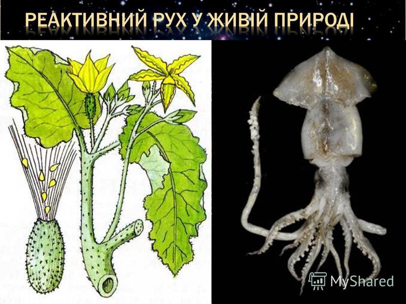 У рослин: Серед рослин реактивне рух зустрічається у дозрілих плодів скаженого огірка. У тварин: Реактивне рух зустрічається у кальмарів, восьминогів, медуз, каракатиць, створкових молюсків та інших членистоногих.