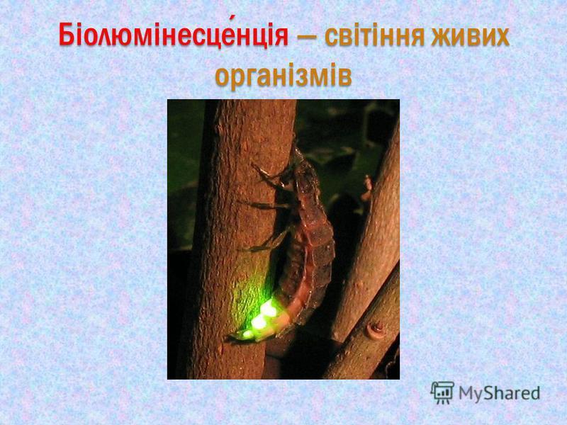 Біолюмінесценція світіння живих організмів