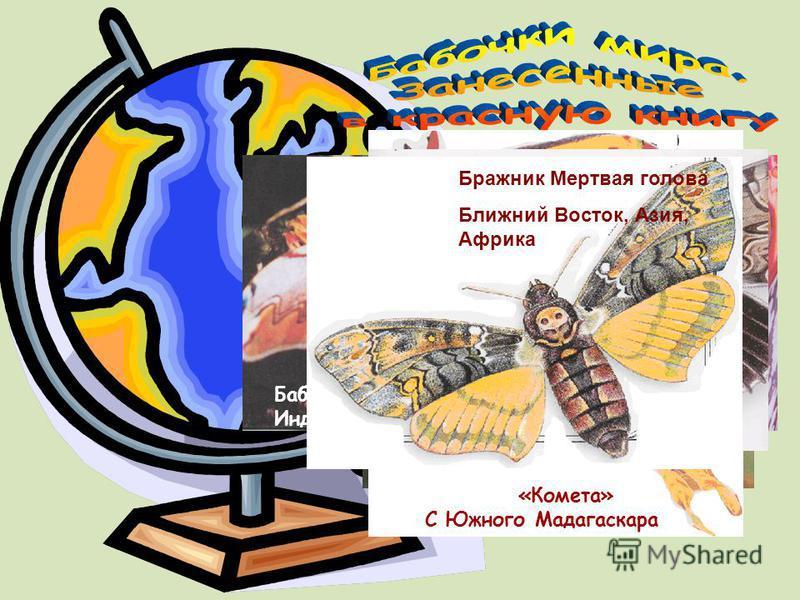 «Комета» С Южного Мадагаскара Переливница большая Бабочка из Индии Ночная бабочка из Африки Орденская лента Европейские страны Бражник Мертвая голова Ближний Восток, Азия, Африка