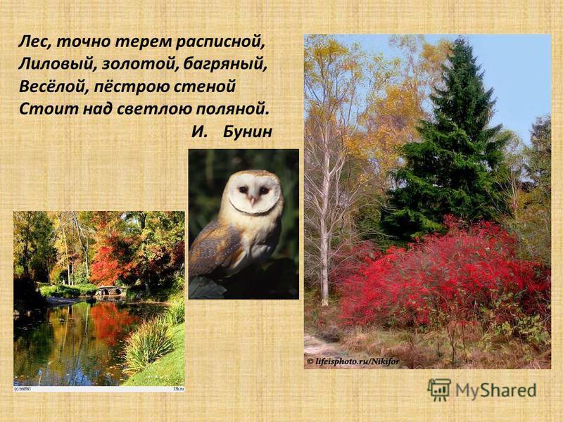 Лес, точно терем расписной, Лиловый, золотой, багряный, Весёлой, пёстрою стеной Стоит над светлою поляной. И. Бунин