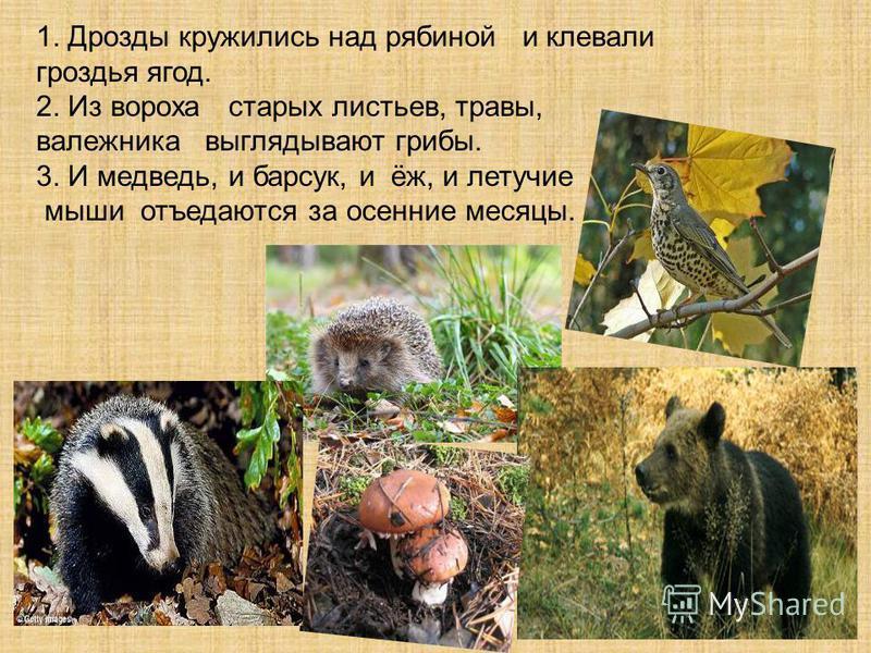 1. Дрозды кружились над рябиной и клевали гроздья ягод. 2. Из вороха старых листьев, травы, валежника выглядывают грибы. 3. И медведь, и барсук, и ёж, и летучие мыши отъедаются за осенние месяцы.