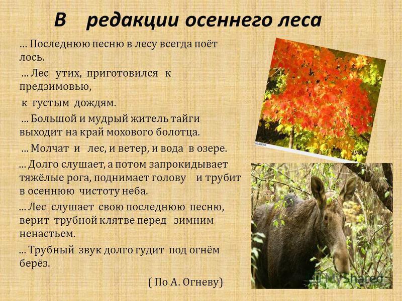 В редакции осеннего леса … Последнюю песню в лесу всегда поёт лось.... Лес утих, приготовился к предзимовью, к густым дождям.... Большой и мудрый житель тайги выходит на край мохового болотца.... Молчат и лес, и ветер, и вода в озере.... Долго слушае
