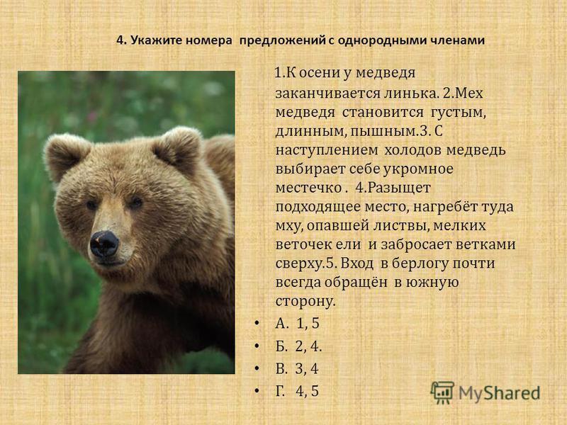 4. Укажите номера предложений с однородными членами 1. К осени у медведя заканчивается линька. 2. Мех медведя становится густым, длинным, пышным.3. С наступлением холодов медведь выбирает себе укромное местечко. 4. Разыщет подходящее место, нагребёт