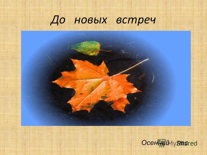 До новых встреч Осенний лес