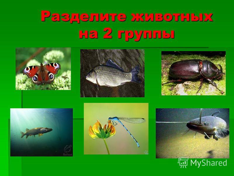 Задачи урока: познакомить детей с насекомыми и рыбами, показать их многообразие и красоту;познакомить детей с насекомыми и рыбами, показать их многообразие и красоту; совместно с детьми выявить важнейшие признаки насекомых и рыб и научить пользоватьс