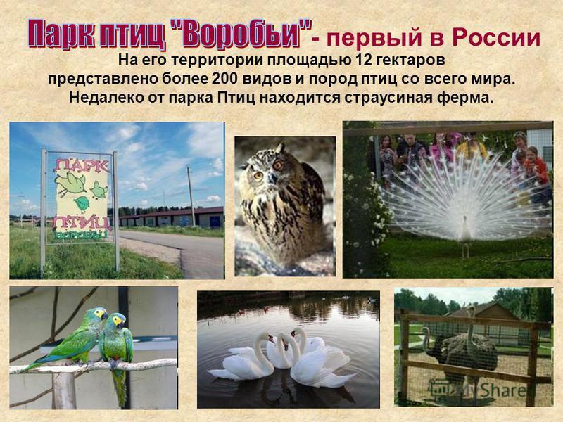 - первый в России На его территории площадью 12 гектаров представлено более 200 видов и пород птиц со всего мира. Недалеко от парка Птиц находится страусиная ферма.