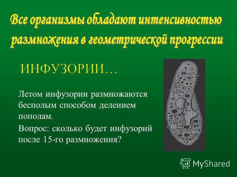 Летом инфузории размножаются бесполым способом делением пополам. Вопрос: сколько будет инфузорий после 15-го размножения?