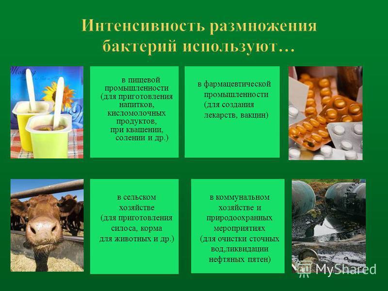 в пищевой промышленности (для приготовления напитков, кисломолочных продуктов, при квашении, солении и др.) в сельском хозяйстве (для приготовления силоса, корма для животных и др.) в фармацевтической промышленности (для создания лекарств, вакцин) в