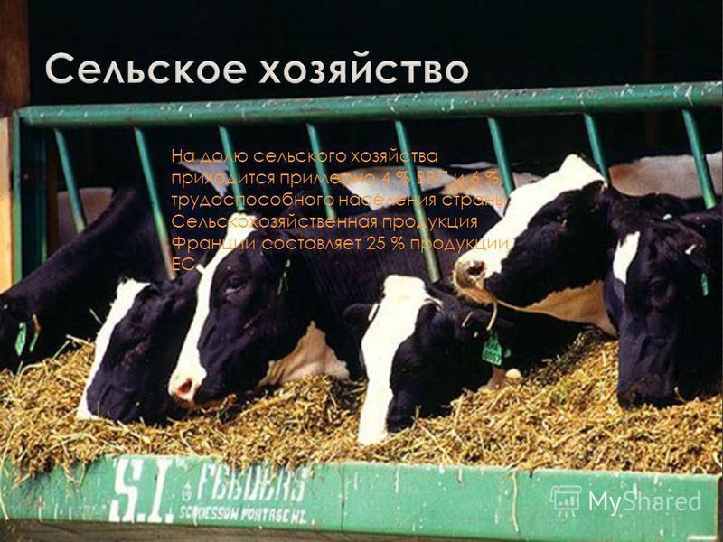 Франция один из крупнейших в Европе производителей сельскохозяйственной продукции, занимает одно из ведущих мест в мире по поголовью крупного рогатого скота, свиней, птицы и производству молока, яиц, мяса