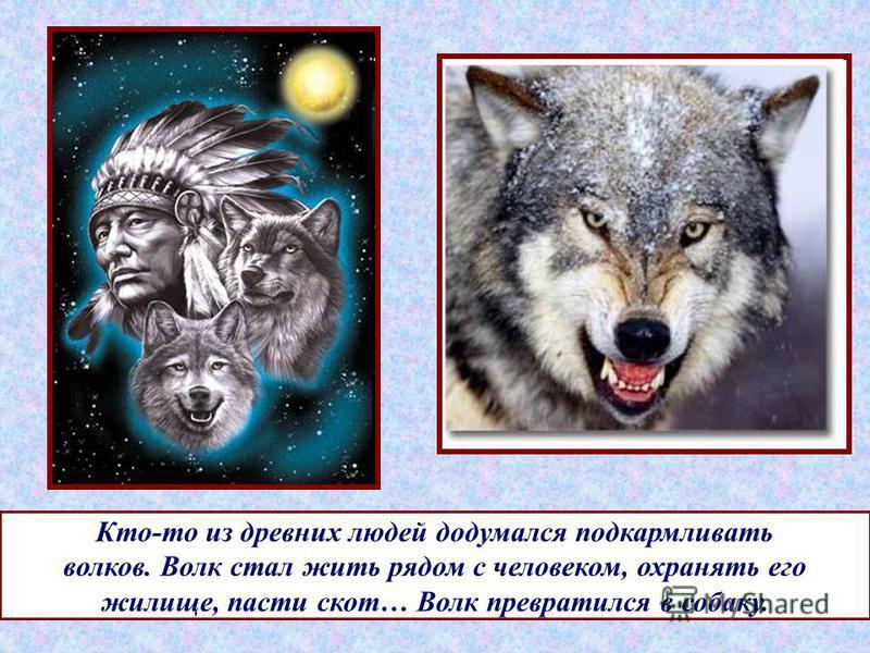 Кто-то из древних людей додумался подкармливать волков. Волк стал жить рядом с человеком, охранять его жилище, пасти скот… Волк превратился в собаку.