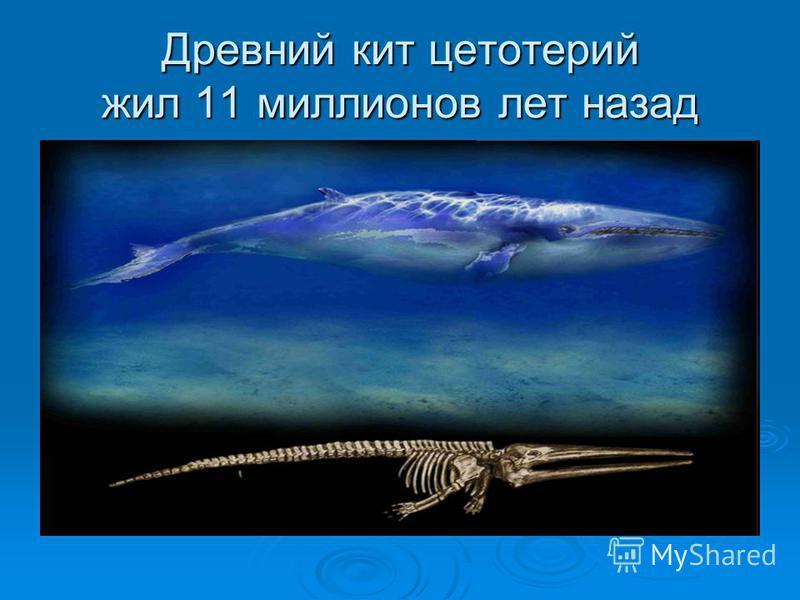 Древний кит цетотерий жил 11 миллионов лет назад