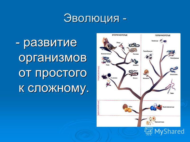 Эволюция - - развитие организмов от простого к сложному. - развитие организмов от простого к сложному.