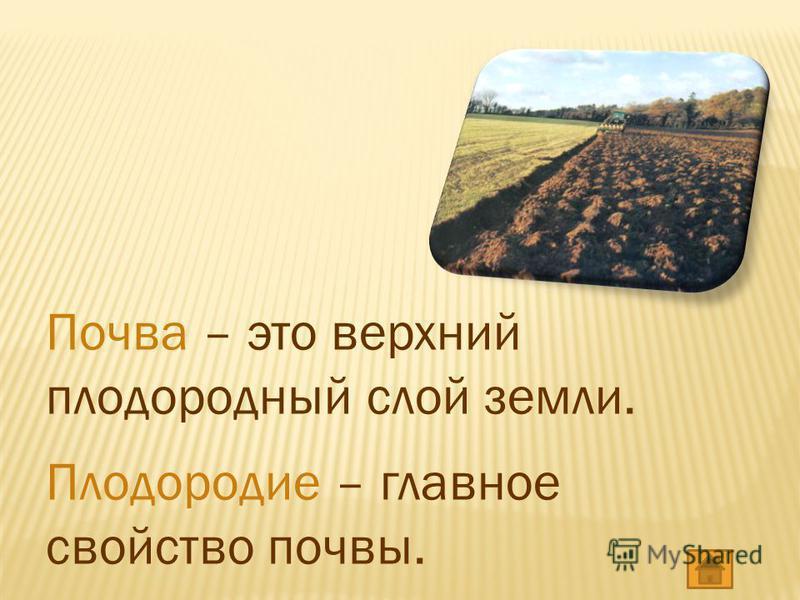 Почва – это верхний плодородный слой земли. Плодородие – главное свойство почвы.