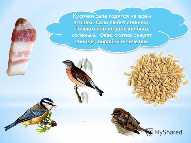Кусочки сала годятся не всем птицам. Сало любят синички. Только сало не должно быть солёным. Овёс охотно съедят синицы, воробьи и чечётки.