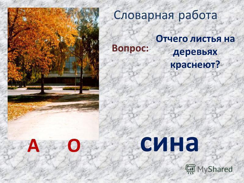 Словарная работа Отчего листья на деревьях краснеют? Вопрос: сина А О