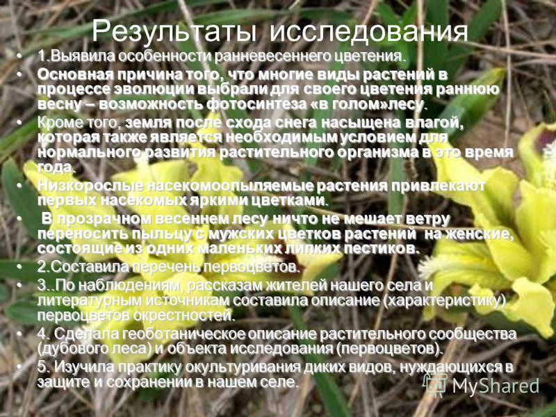 Результаты исследования 1. Выявила особенности ранневесеннего цветения.1. Выявила особенности ранневесеннего цветения. Основная причина того, что многие виды растений в процессе эволюции выбрали для своего цветения раннюю весну – возможность фотосинт