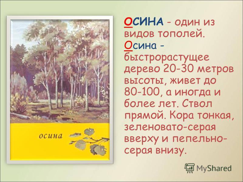 ОСИНА - один из видов тополей. Осина - быстрорастущее дерево 20-30 метров высоты, живет до 80-100, а иногда и более лет. Ствол прямой. Кора тонкая, зеленовато-серая вверху и пепельно- серая внизу.