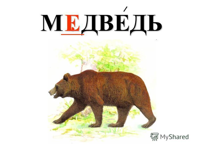 М. ДВЕДЬ Е