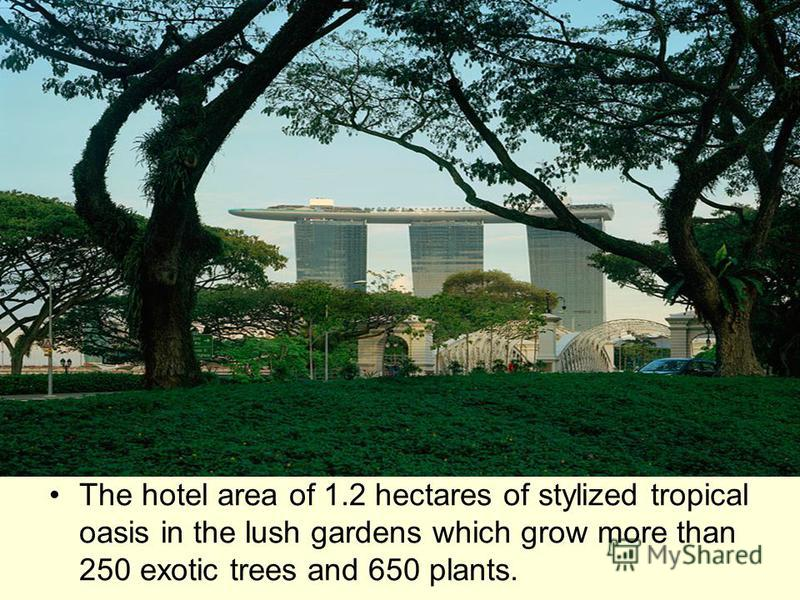 The hotel area of 1.2 hectares of stylized tropical oasis in the lush gardens which grow more than 250 exotic trees and 650 plants.
