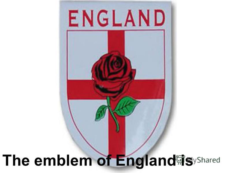 The emblem of England is rose.