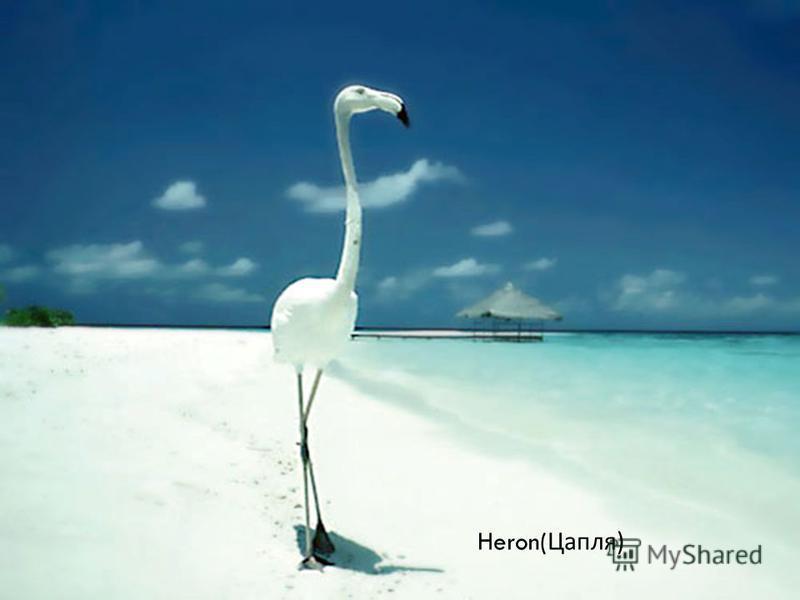 Heron( Цапля )