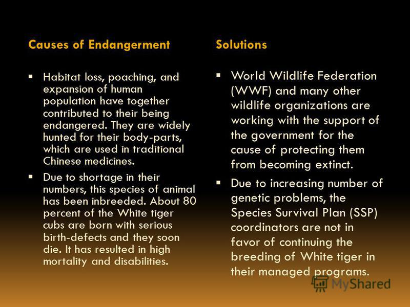 Causes of Endangerment Solutions Habitat loss, poaching, and expansion of human population have together contributed to their being endangered. They are widely hunted for their body-parts, which are used in traditional Chinese medicines. Due to short