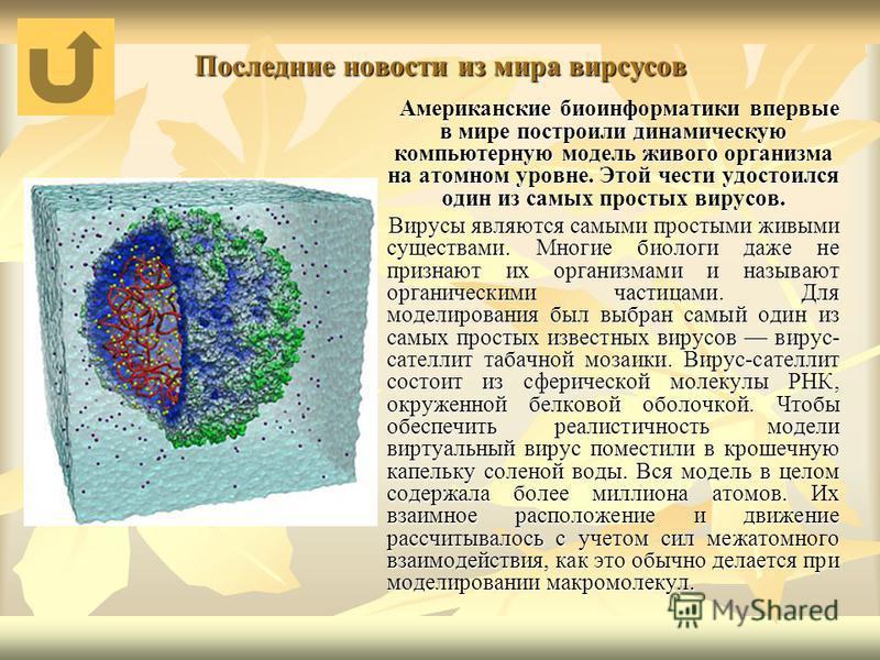Последние новости из мира вирсусов Американские биоинформатики впервые в мире построили динамическую компьютерную модель живого организма на атомном уровне. Этой чести удостоился один из самых простых вирусов. Американские биоинформатики впервые в ми