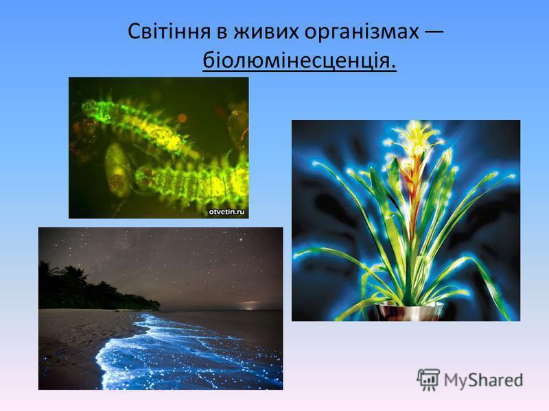 Світіння в живих організмах біолюмінесценція.