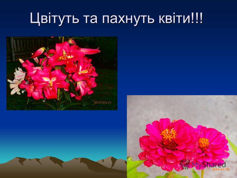 Цвітуть та пахнуть квіти!!!
