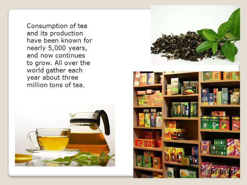 Consumption of tea and its production have been known for nearly 5,000 years, and now continues to grow. All over the world gather each year about three million tons of tea.