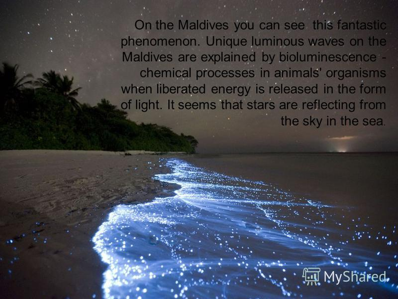 On the Maldives you can see this fantastic phenomenon. Unique luminous waves on the Maldives are explained by bioluminescence - chemical processes in animals' organisms when liberated energy is released in the form of light. It seems that stars are r