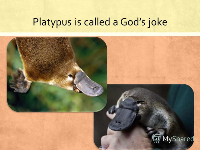Platypus is called a Gods joke