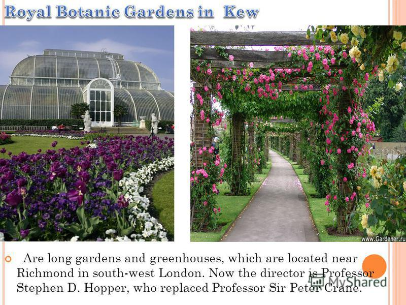 Are long gardens and greenhouses, which are located near Richmond in south-west London. Now the director is Professor Stephen D. Hopper, who replaced Professor Sir Peter Crane.
