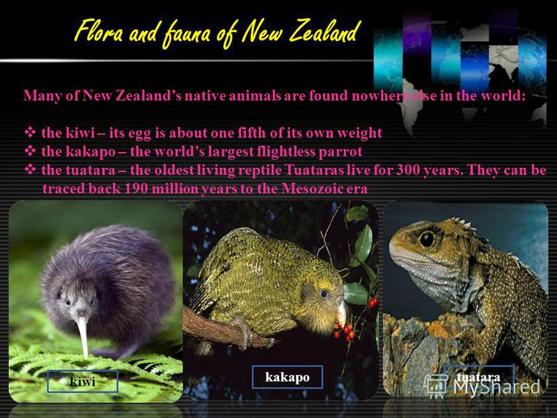 Flora and fauna of New Zealand Many of New Zealands native animals are found nowhere else in the world: the kiwi – its egg is about one fifth of its own weight the kakapo – the worlds largest flightless parrot the tuatara – the oldest living reptile