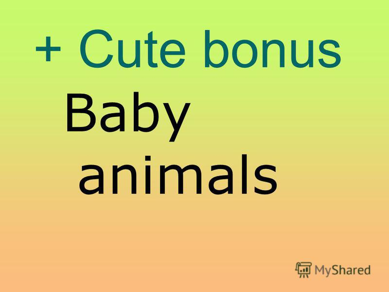 + Cute bonus Baby animals